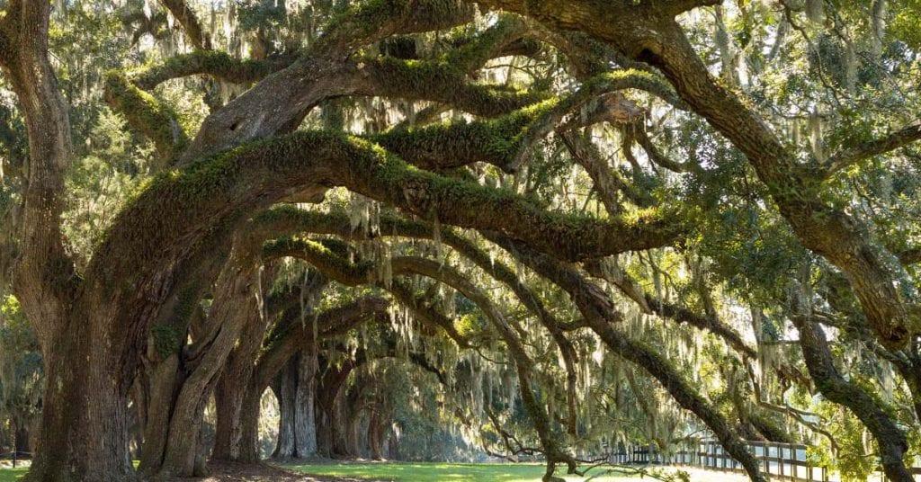 Plantation Tour in Charleston SC